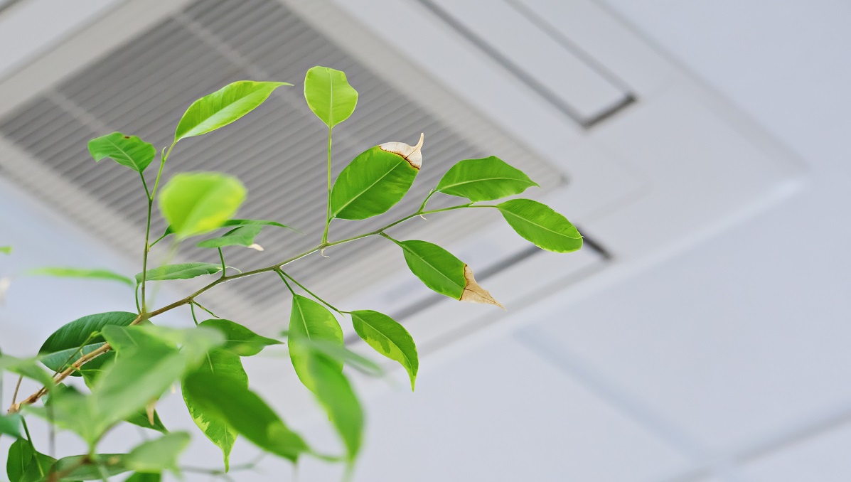 Indoor Air Quality - Humidifiers vs dehumidifiers